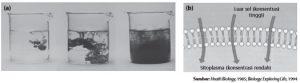 Tinta yang berdifusi ke dalam air (b) Difusi yang terjadi pada membran sel