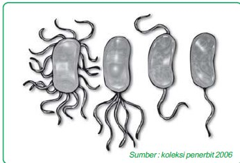 flagel bakteri8965a454