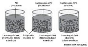 Mekanisme osmosis