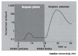 Respons kekebalan primer dan kekebalan sekunder