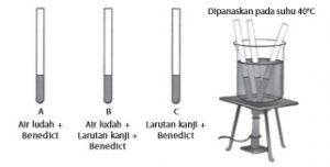 Percobaan Biologi Fungsi Ludah