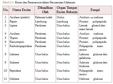 fungsi-fungsi enzim pencernaan