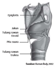 Struktur laring
