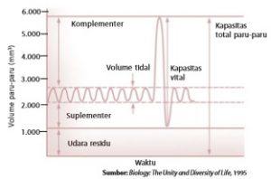 Grafik volume paru-paru