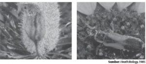 Polinasi dengan bantuan hewan (zoodiogami).