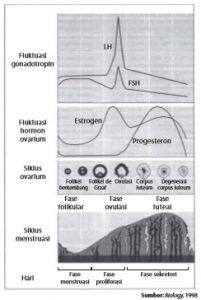 Grafik siklus menstruasi