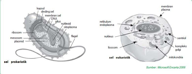 perbedaan prokariotik dengan eukariotik