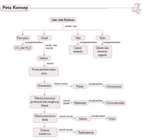 Sistem ekskresi manusia dan hewan ginjal urine proses metabolisme peta konsep bab 7 ccuart Images