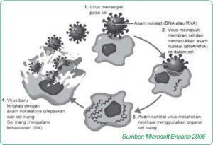 replikasi virus mekanisme siklus litik 84569521