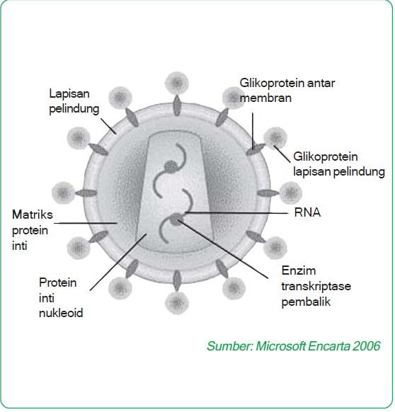 struktur virus aids