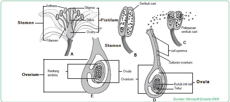 Reproduksi generatif pada satu organisme tertentu (misal: fertilisasi)