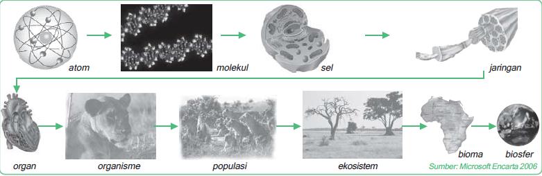 Hirarki struktural biosains (mulai dari atom, molekul, sel, jaringan, organ, organisme, populasi, ekosistem, bioma, dan biosfer)