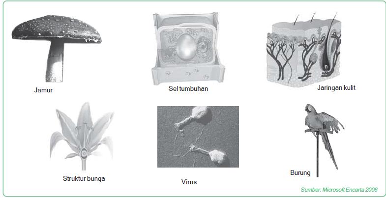 Ruang lingkup yang dikaji dalam biologi