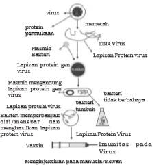 Proses pembuatan vaksin melalui rekayasa genetika
