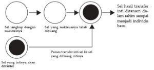 Proses transfer inti sel