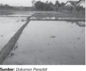 Lahan digunakan dalam pengelolaan pertanian padi.