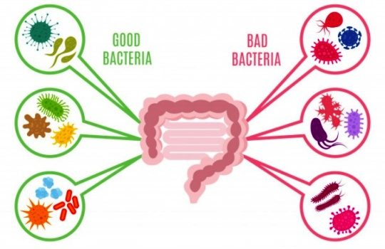 Bakteri yang Baik untuk Kesehatan dan Tumbuh Kembang Anak